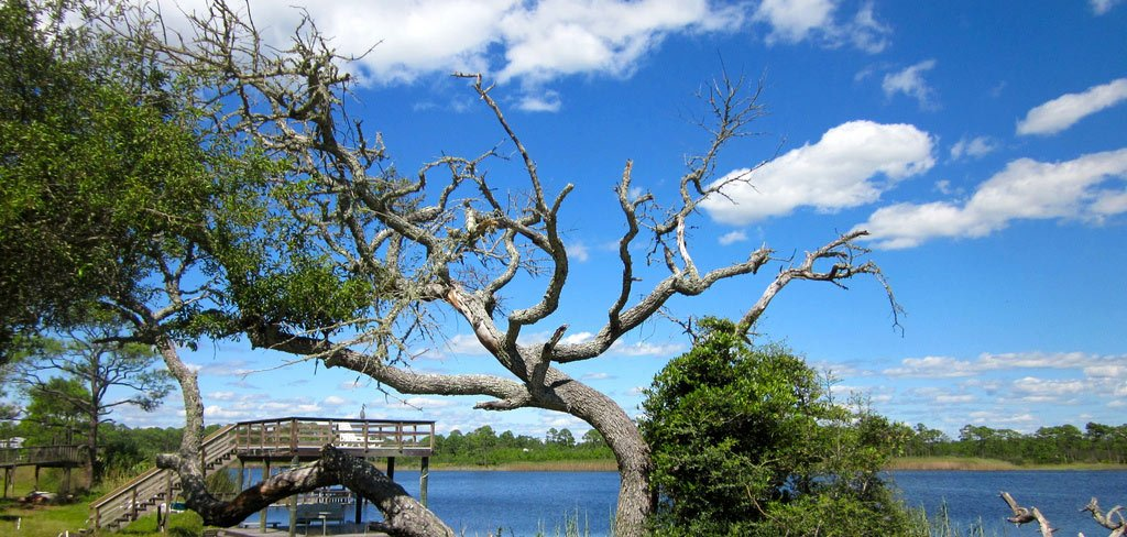Scenic A Guide 30a Florida Visitor's For 30-a Discover
